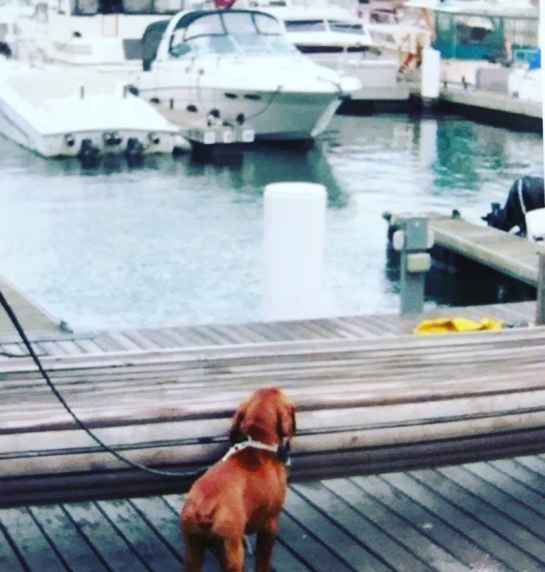 Vizsla puppy waterfront